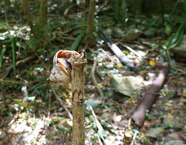Hermit crab climbing