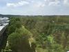 Part of Sungai Buloh Forest Reserve.