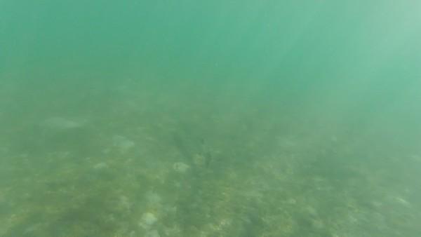 2018-03-22 Juno Beach