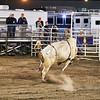 Cowboy does a disappearing act but bull is not fooled