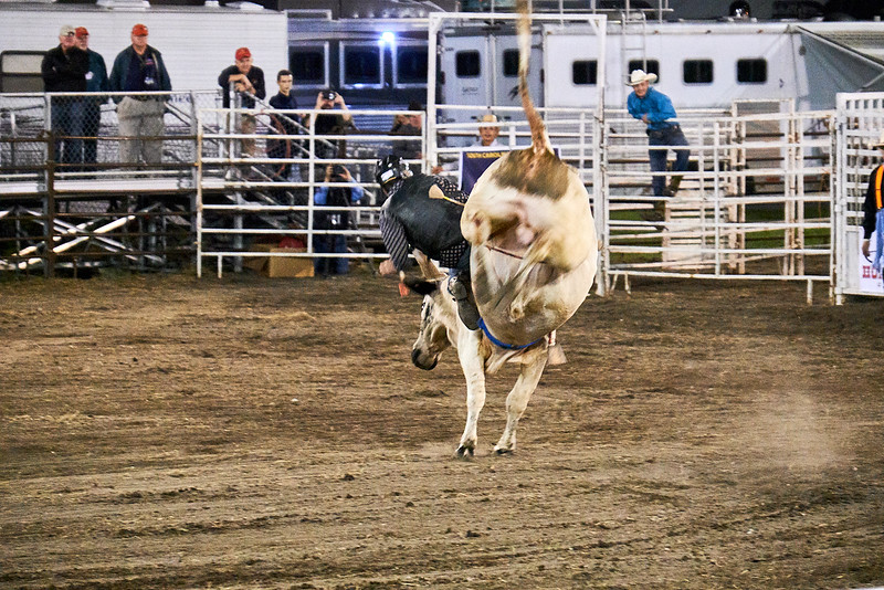 Bull hasn't given up - First sign of cowboy problem.