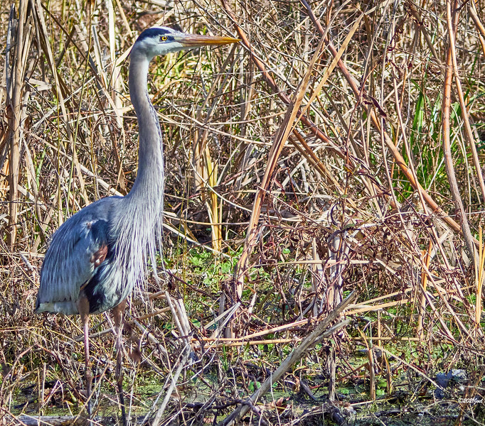 GBH just looking around. I did not see any indication it was ready to fly.