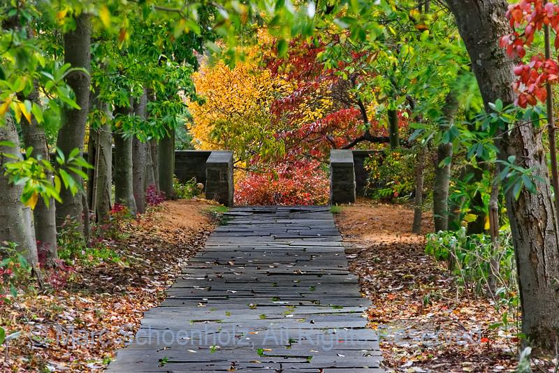 A Walk Through the Fall Foliage, Photographed at: Skylands Manor, Ringwood, NJ. January, 2007  ©2007 Marc Schoenholz