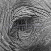 EYELASH<br /> <br /> Almost every creature seems to have exceptionally long eyelashes.  Nature adapts to need.