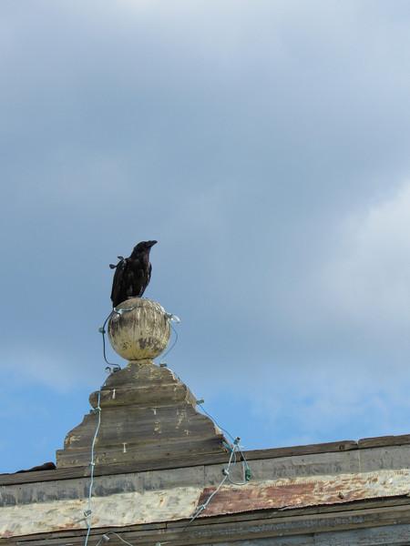 Ravens were everywhere