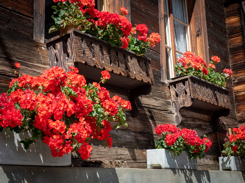 Gorgeous flowers decorating local houses are common.