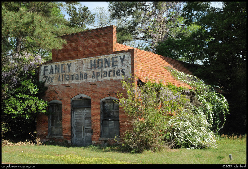 (15Apr10)<br /> <br /> fancy honey, along hwy 331, south georgia.<br /> <br /> f/16, 1/80s, iso 200.