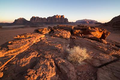 The desert wakes