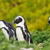 Penguin Crew