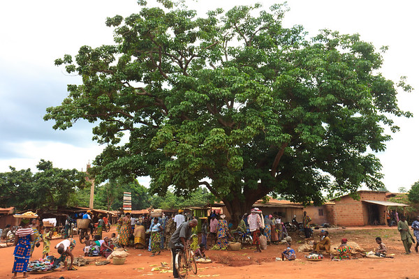 Click here to buy at Alamy. Keywords: Abomey Africa Balancing Benin Market Street Tree MyID: 09AZa5281