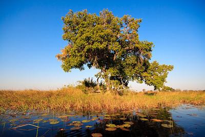 09AZb2952 Africa Botswana Okavango Delta River Seronga