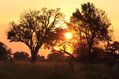 Click here to buy at Alamy. Keywords: Africa Botswana Okavango Delta River Seronga Dawn MyID: 09AZa8404