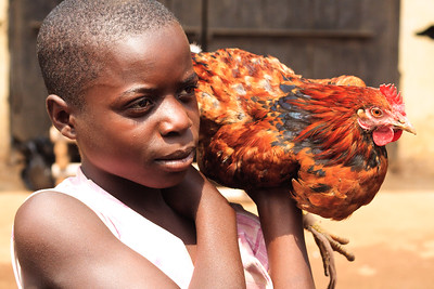 Click here to buy at Alamy. Keywords: Africa Birds Cameroon Chicken Kids Street Wum MyID: 09AZb2445