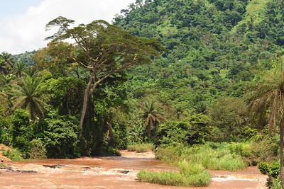 09AZb2469 Africa Cameroon Rivers Tree Water Wum Wum Bamenda
