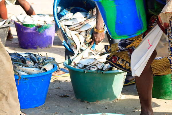 09AZb998 Africa Fish Fish Stalls Gambia Gunjur Market Port