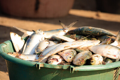 09AZb996 Africa Fish Fish Stalls Gambia Gunjur Market Port
