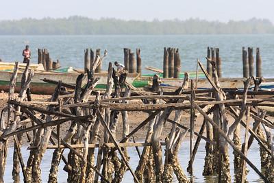 09AZa1974 Africa Bintang Gambia Kingfisher Pied Kingfishers