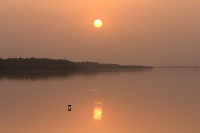 09AZa2031 Africa Gambia Pied Kingfishers River Tendaba
