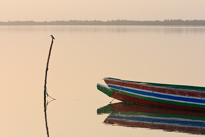 09AZa2094 Africa Boat Gambia Pied Kingfishers Tendaba