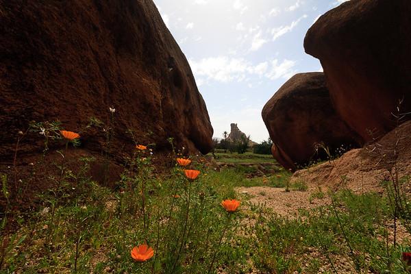 09AZa261 Africa Flower Morocco Mountain Tafraoute Valley