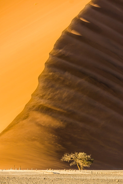 Dune 45 and the lonely tree