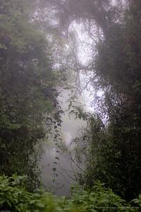 ...the mist