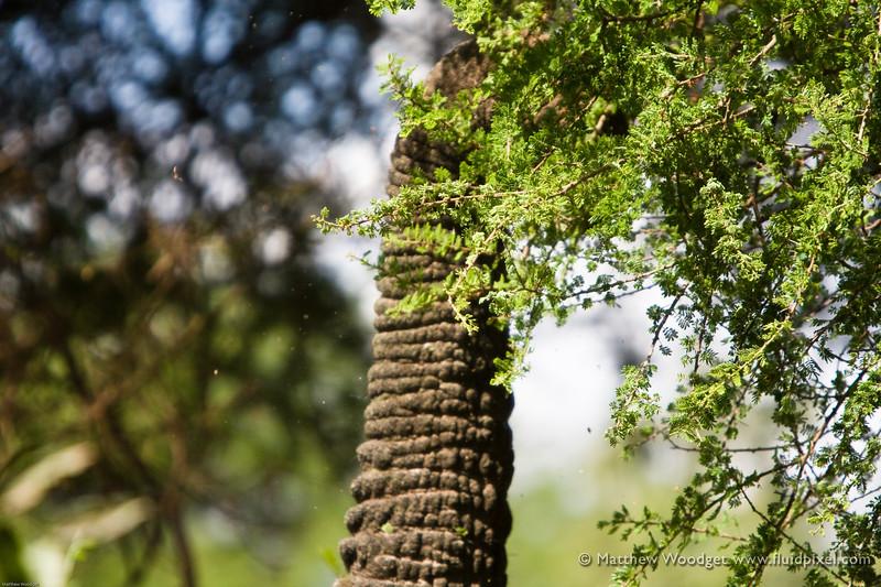 Multi Purpose - Lake Manyara