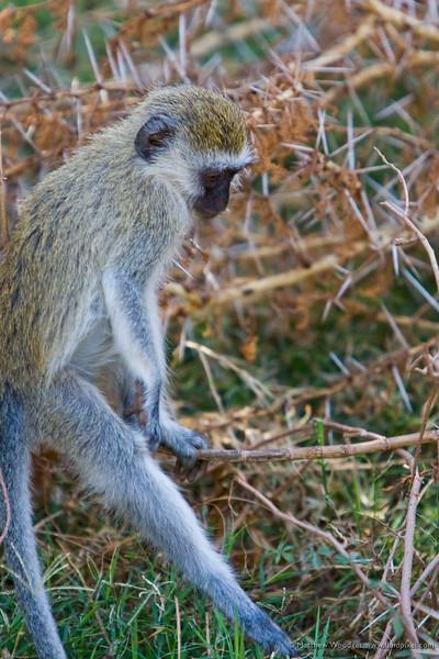 Monkey around?