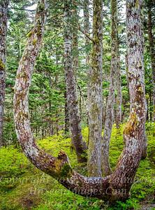 High Woods II - Juneau - Copyright 2017 Steve Leimberg UnSeenImages Com _DSF5293