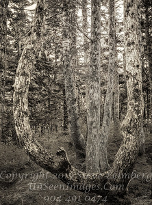 High Woods II - Juneau - B&W  Copyright 2017 Steve Leimberg UnSeenImages Com _DSF5293