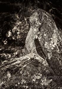 High Woods Trees Juneau - B&W Copyright 2017 Steve Leimberg - UnSeenImages Com _DSF5323