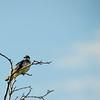 I saw a birdie