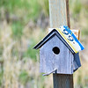 Alaska Birdhouse
