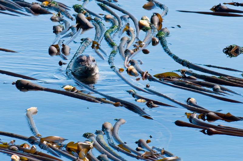 Kelp Nursery