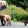 Moma Grizzly & Cub I