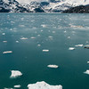 Floating ice in Glacier Bay National Park.