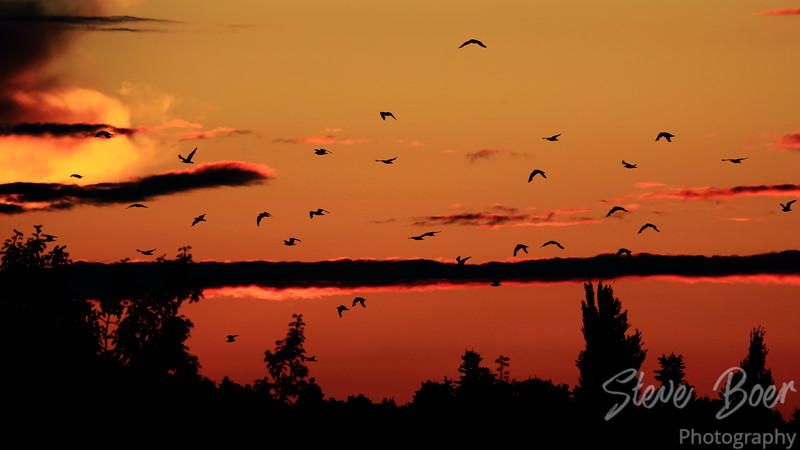 Sunset Seagulls 2