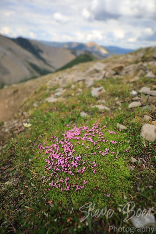 Purple flowers on mountain