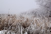 More frost, less fog
