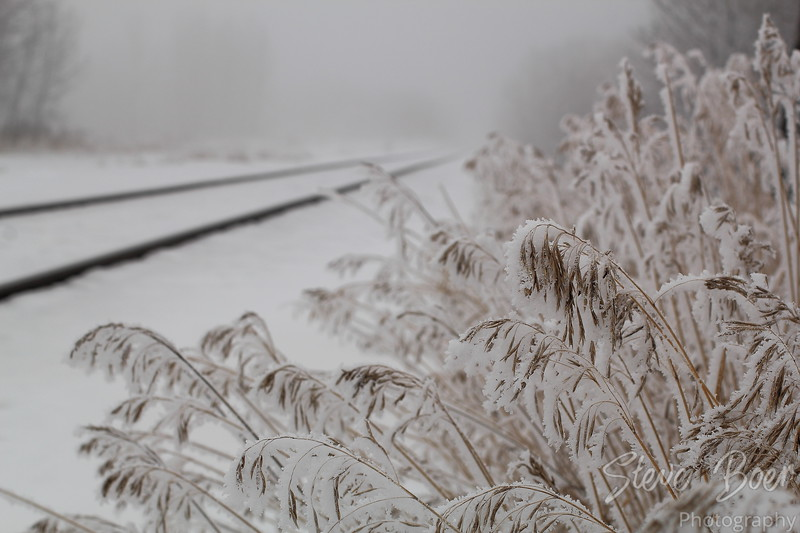 Grass and Tracks landscape