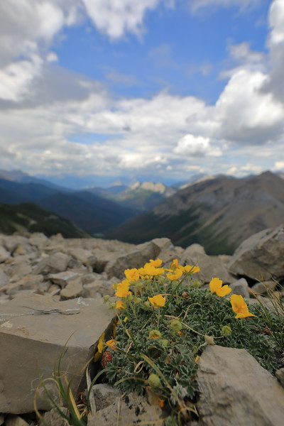 Mountain top flowers
