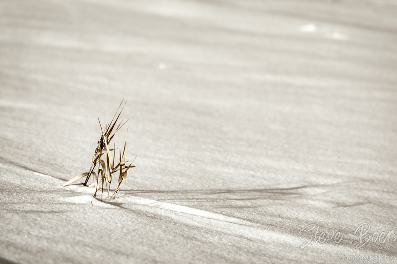 Dead grass in snowy field