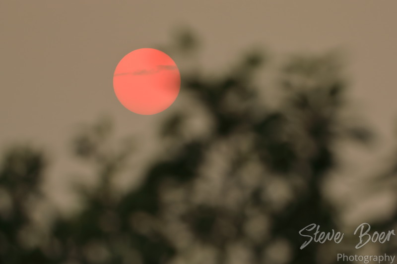 Red sun setting behind trees