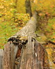 Fallen Tree in Autumn