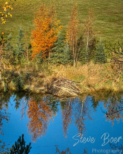 Beaver lodge in autumn
