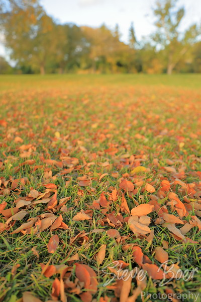 Field of leaves