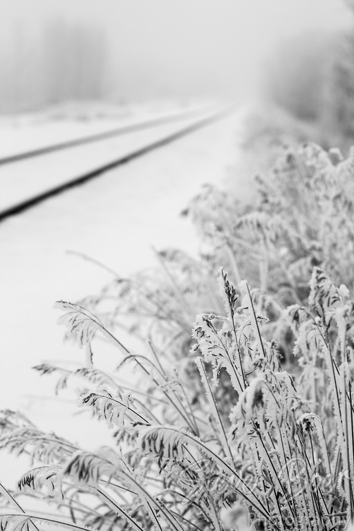 Frosty Grass by Train Tracks