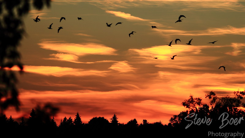 Sunset Seagulls 3