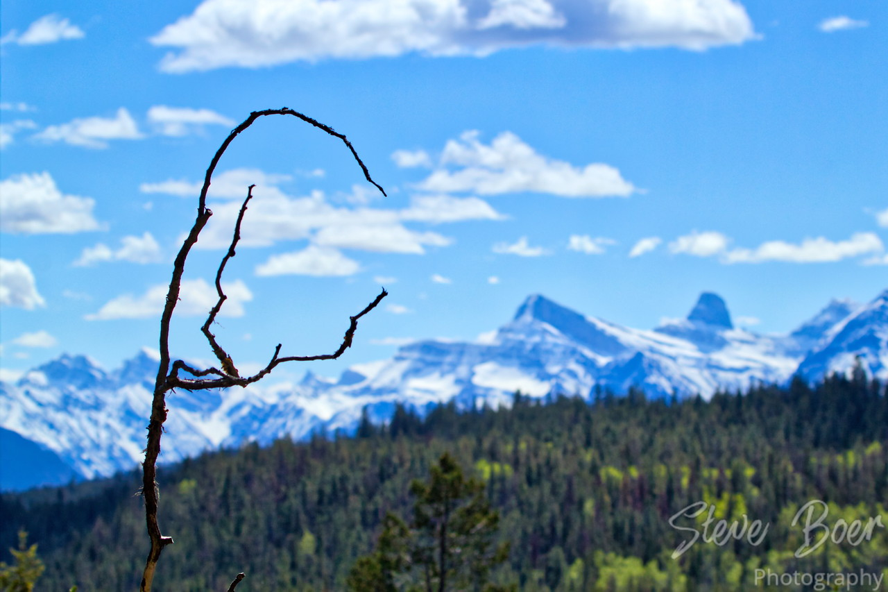 Craggy Branch With Mountain Background