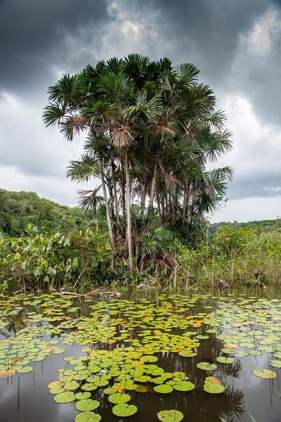 Jaguar Lake